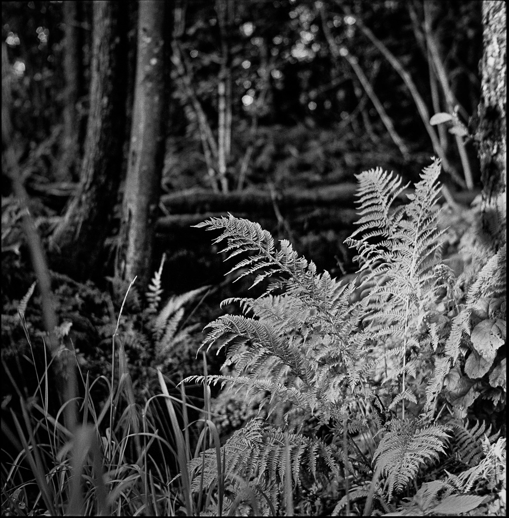 140628 Yashica 123G,TriX400@400, Stand developed Rodinal 1:100 60min