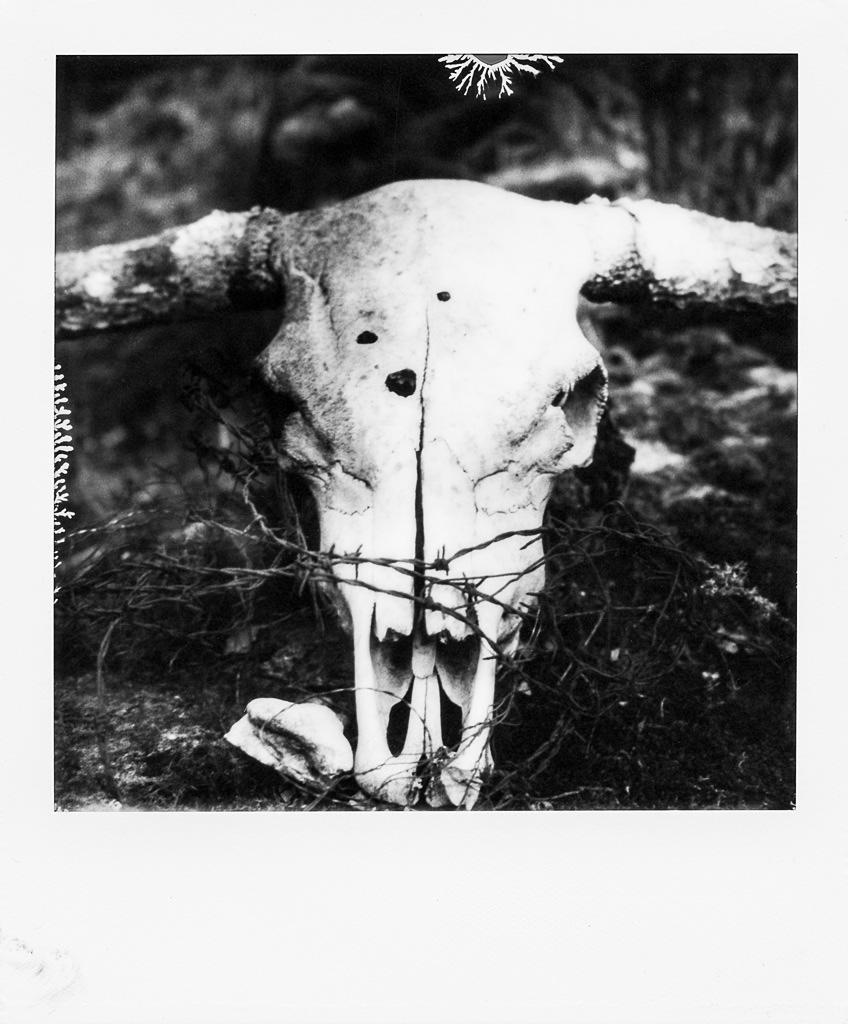 150424 Polaroid SX70,TIP Silver Shade